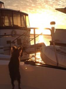 Missy the Boat Dog