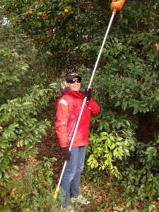 Cindy Picking Tangerines