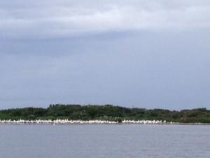 Egret Island