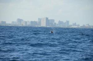 Sailfish Breach